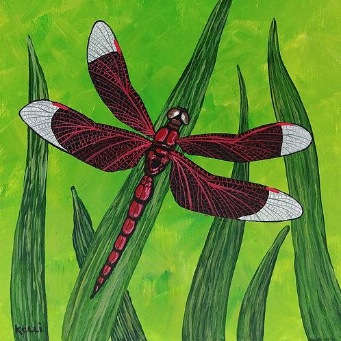 """Dragonfly 7"""