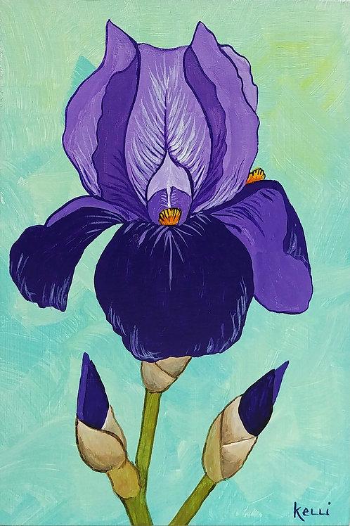 """""""Iris 2"""""""
