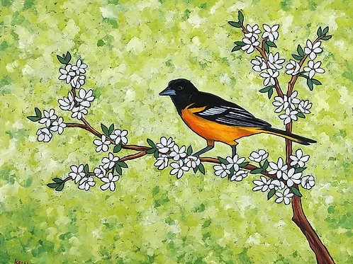 Baltimore Oriole on Flowering Branch""