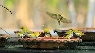 bird fountains.jpg