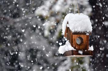 bird feeders.jpg