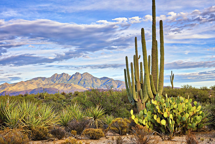 Saguaro and Four Peaks near Phoenix, Arizona..jpg