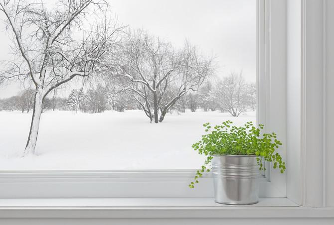 Come curare le piante in inverno.. i consigli di Rosina!