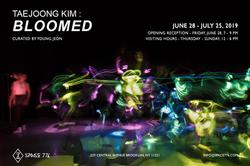 Taejoong Kim: Bloomed