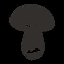 Champignon esquissés