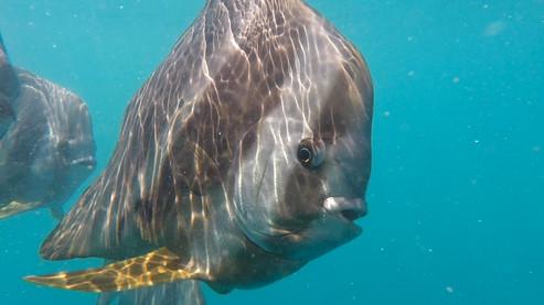 fish australia.jpg