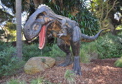 Nano Tyrannosaur - Perth Zoo