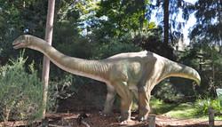 Apatosaurus - Perth Zoo