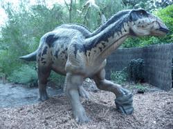 Edmontosaurus - Perth Zoo