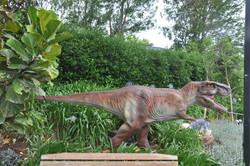 Tyrannosaurus - Adelaide Zoo