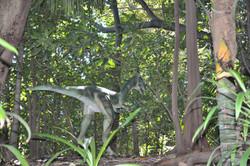 Ornotholestes - Perth Zoo