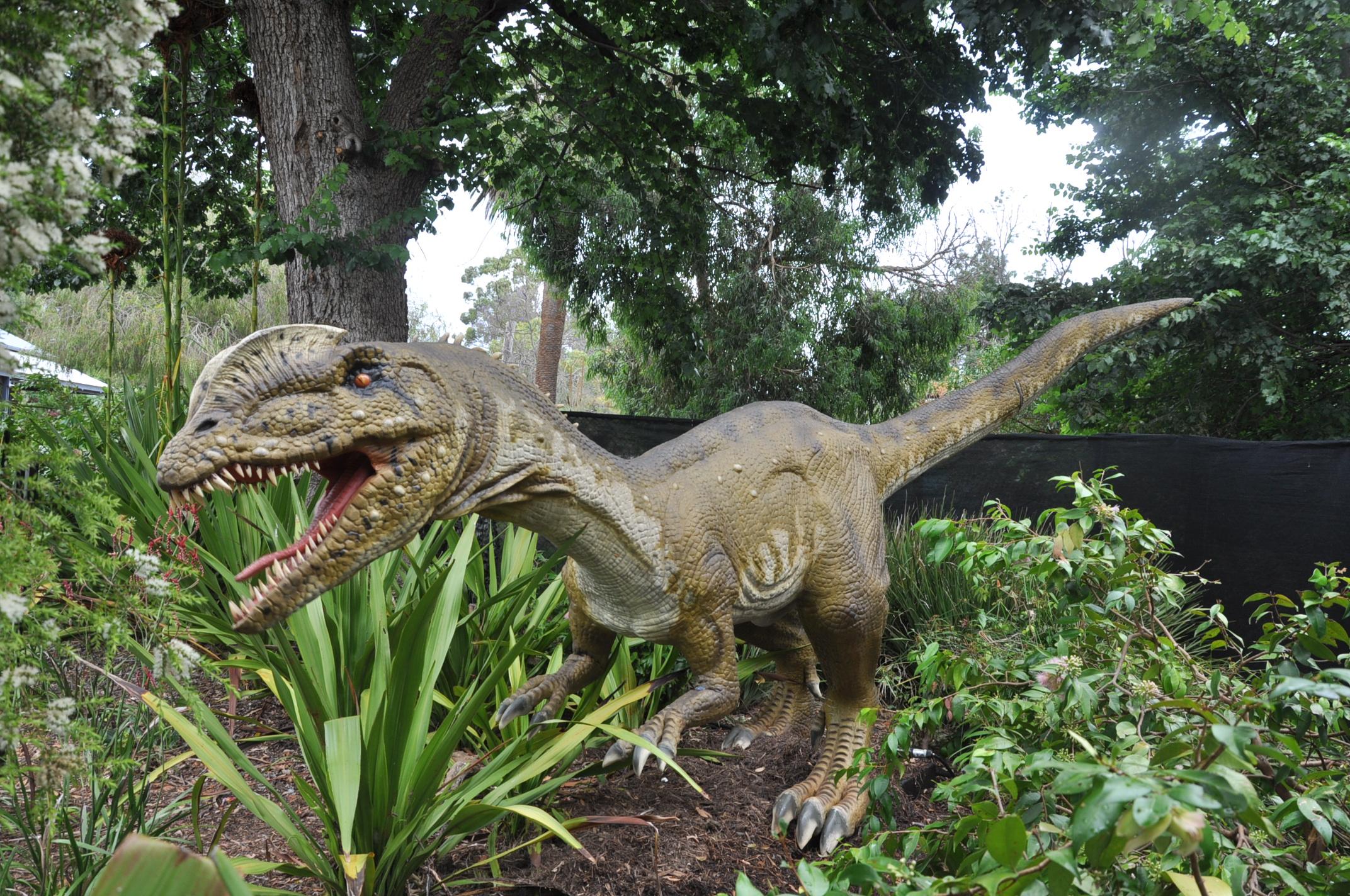 Dilophosaurus - Adelaide Zoo