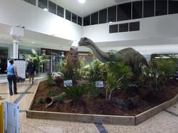 Apatosaurus - Coffs Harbour