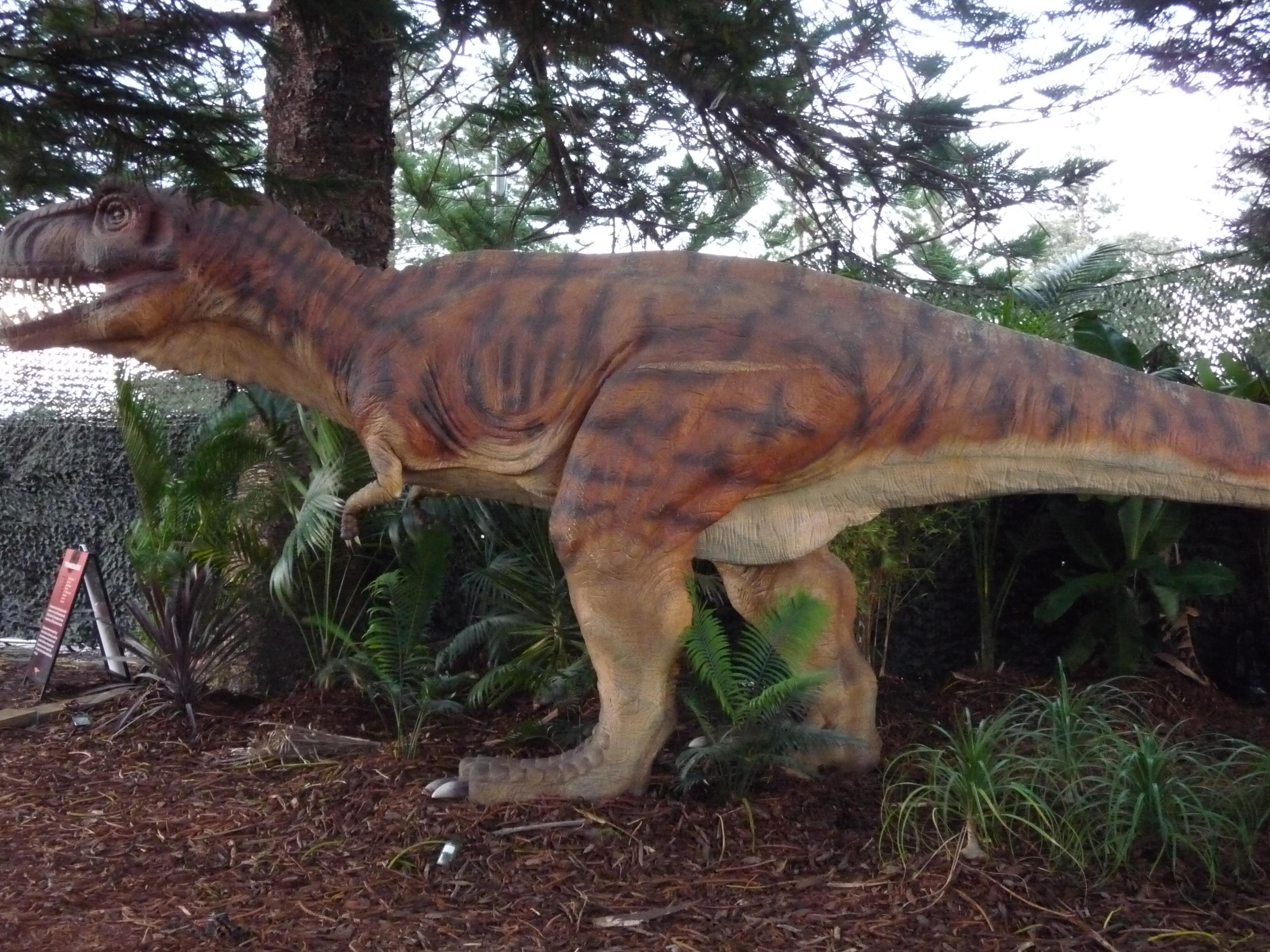 Tyrannosaurus - Perth Zoo