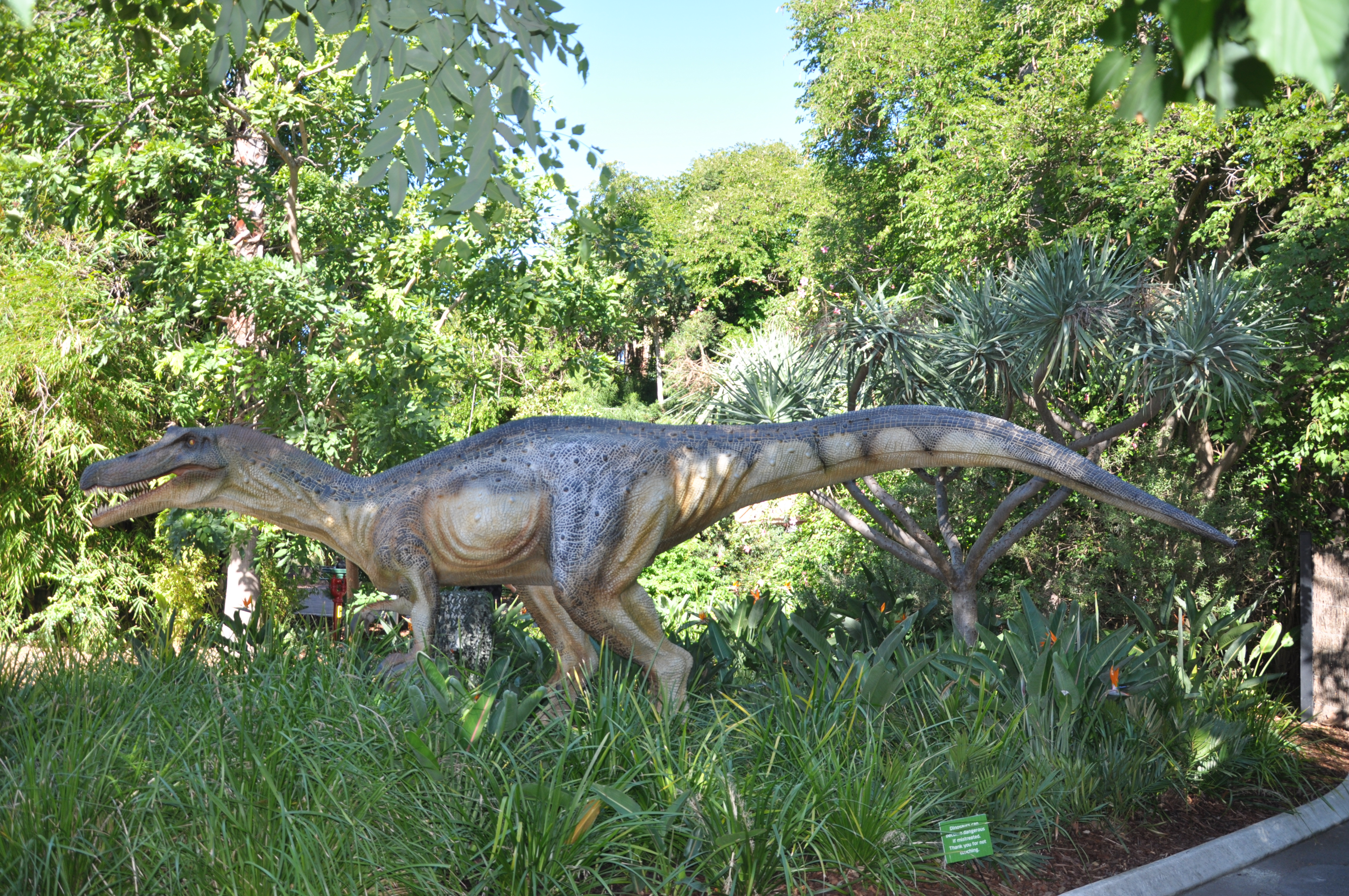 Baronyx - Perth Zoo