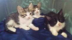 Abandoned Kittens.jpg