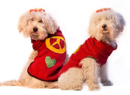 Moda Canina - Fotografía de moda