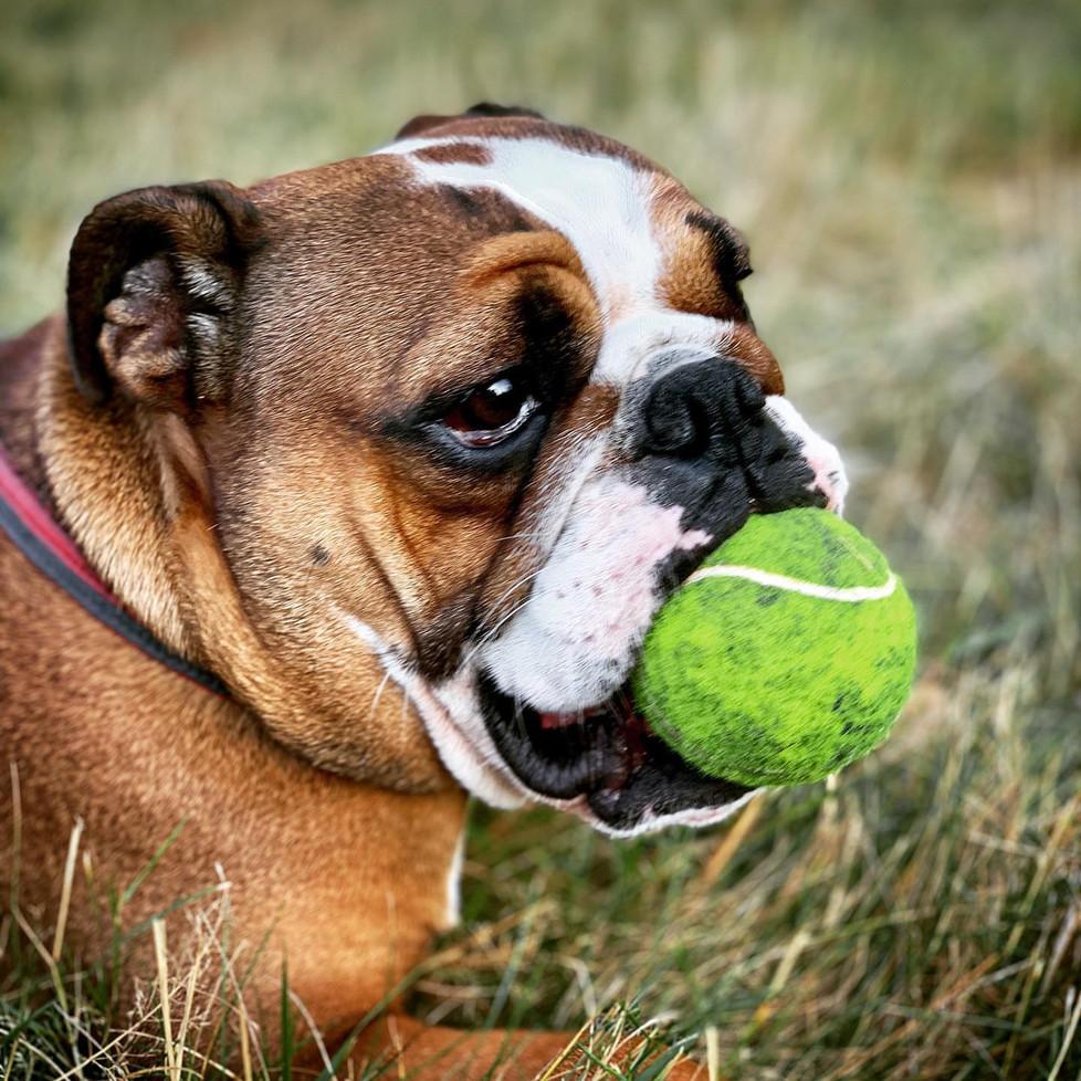 vipetslondon pet care services