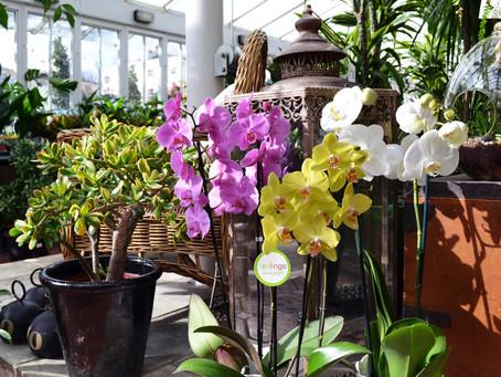 让室内清香又亮丽,适合放于室内的花草