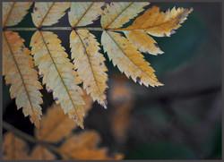 Yellowy Leaves