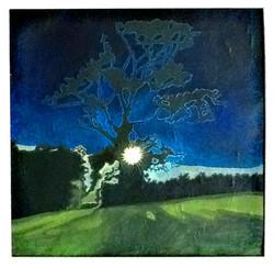 Devon Oak