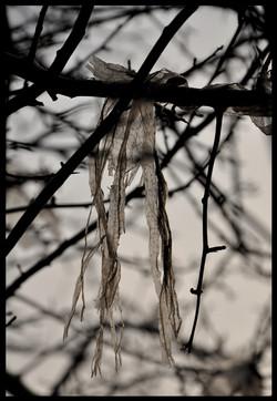 Bag In Tree 1