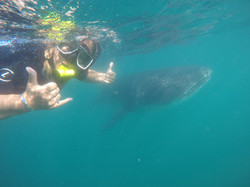 Swimming with Whale Sharks,MX