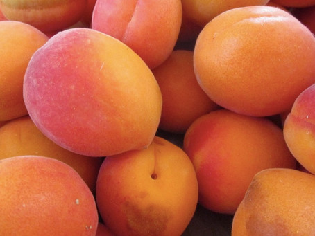 """Of Apricots, Arks & """"Proustian Moments"""""""