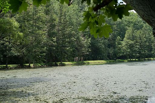 the swimming hole - nathaniel klein