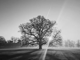 the-tree-of-life-WBHWAASW.jpg