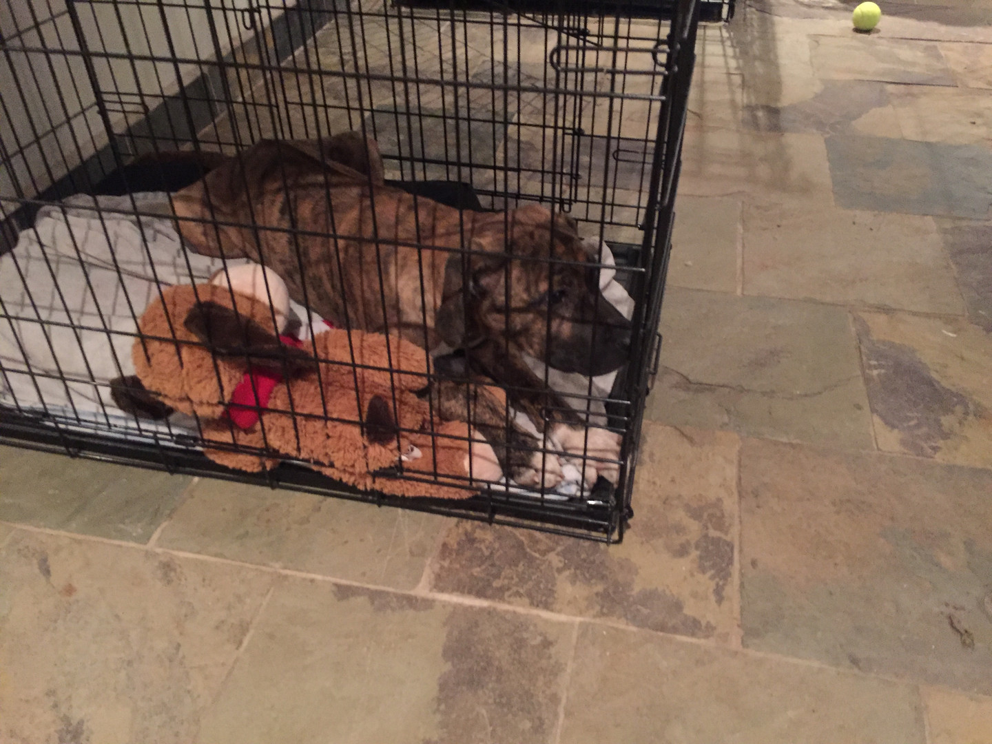 Crate trained puppy