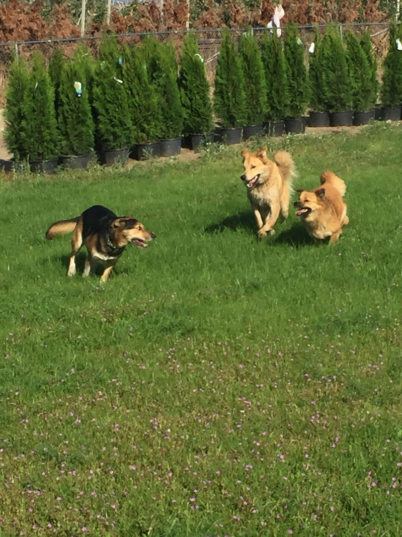 Run, chase and play
