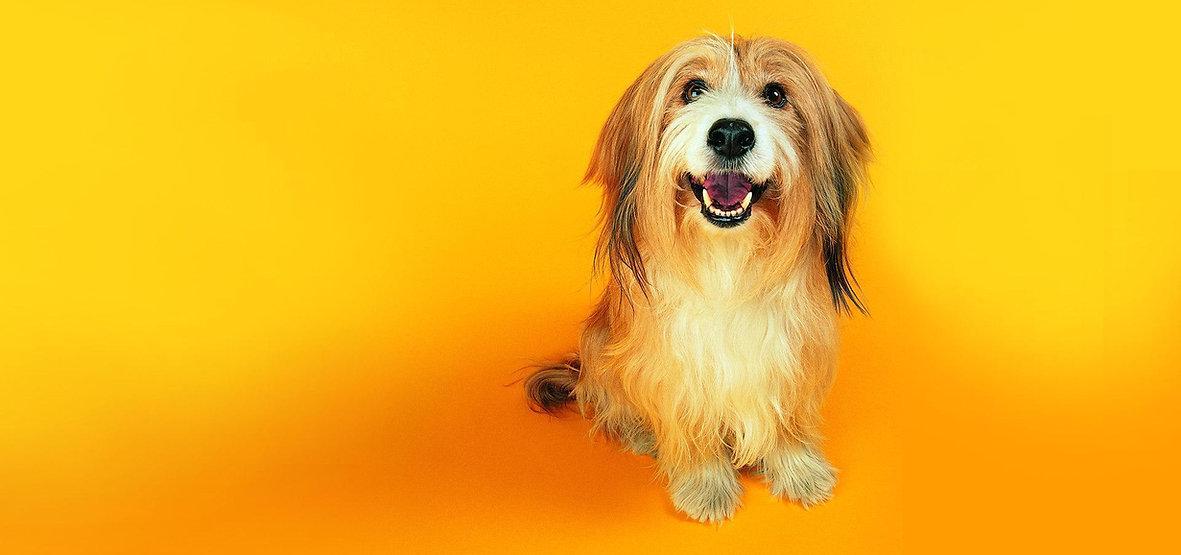 Fun-dog-wallpaper-dogs-13632019-1920-120