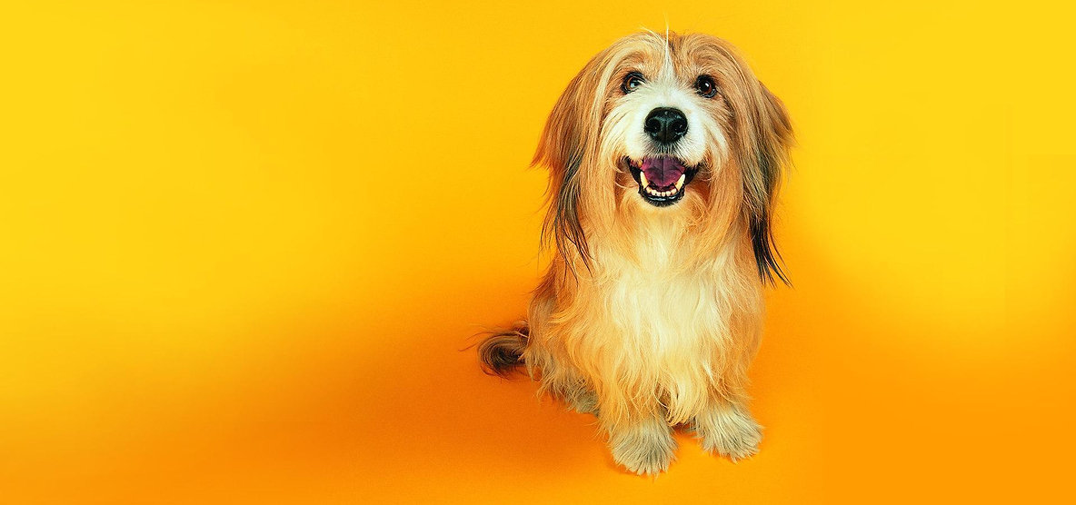 Fun-dog-wallpaper-dogs-13632019-1920-120