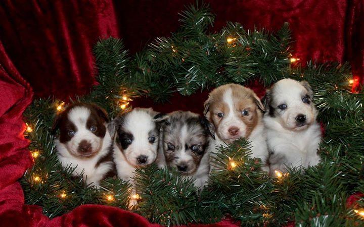 _3 Christmas Cuteness _3