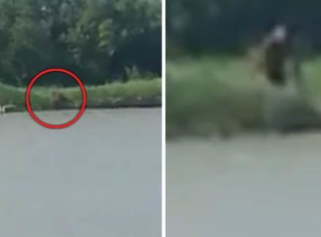 Humanoid Dog Creature caught on film in Mexico.