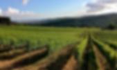 виноград.png