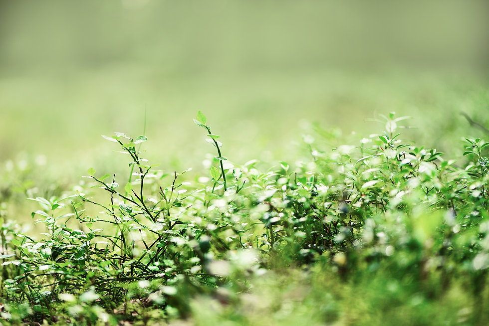 green-natural-background-out-of-focus-fo