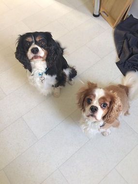 Oscar & Jasper waiting for a treat