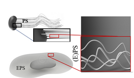 One of my favorite studies just accepted: Quantification of molecular bonding...