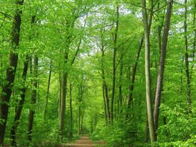 Heerlijk de geur van het bos