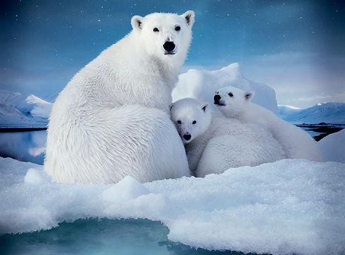 To-The-Arctic-HERO-2.jpg