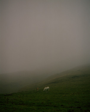 Two horses, 2014