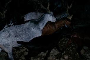 Goats #2, 2014
