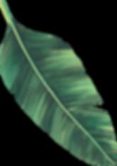 Leaf3-(2)_edited.png