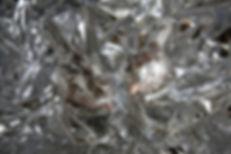 M12A2701.jpg