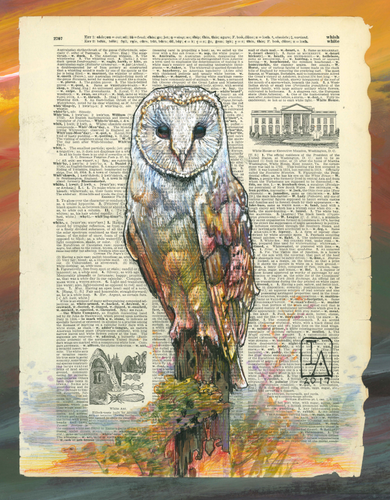 barnowl-sunset-crop.png