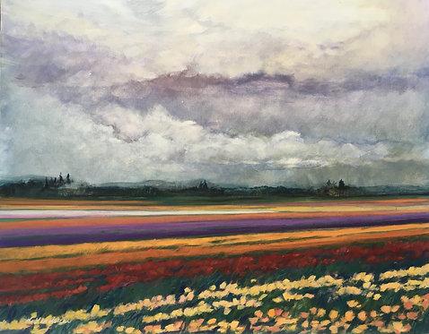 Rainy Day on the Tulip Fields