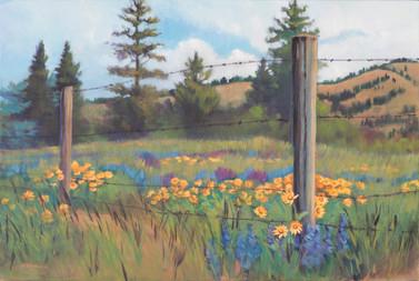 Field of Flowers 2018