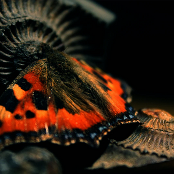 Fossil and Butterfly